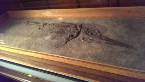 Ichthyosaur collected in Lyme Regis by Mary Anning