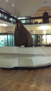 An after hours silent encounter with the Horniman Walrus