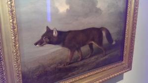 A foxy looking dingo