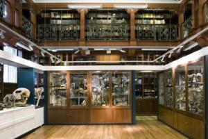 The Grant Museum of Zoology Copyright UCL