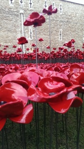 The Tower of London Poppies, Sept 2014