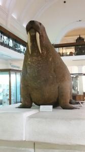 The Horniman Walrus