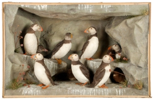 Edward Hart's Atlantic Puffin. Copyright Horniman Museum and Gardens Photo: Claire Collins