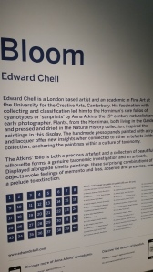 Bloom by Edward Chell