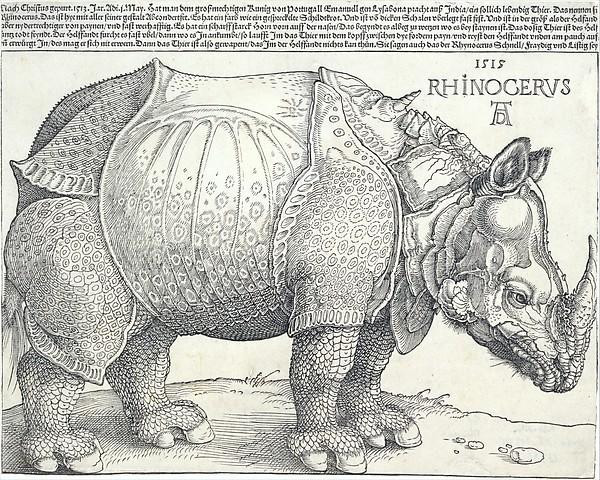 durer-rhino