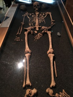One of the 11 skeletons on display